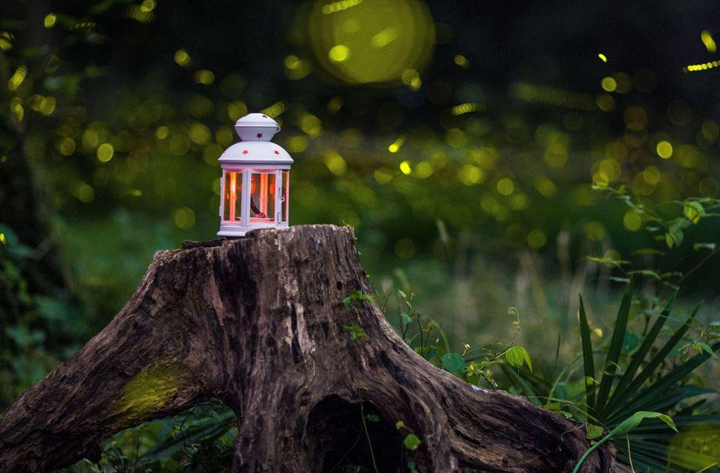 Glühwürmchen Wo In Deutschland